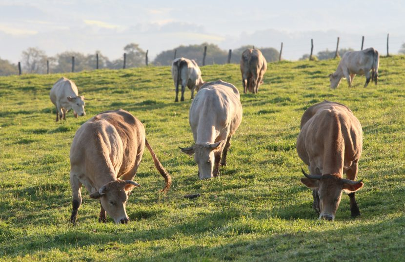 Beef aus dem Baskenland