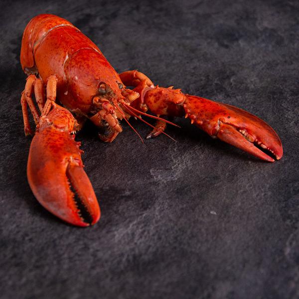 Hummer mit Schale MSC 325 g online kaufen in Premium Qualität. Atlantik Lobster bestellen, Hummerfleisch in Schale online kaufen im Online Shop. 24h Lieferung!